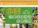 小麦病虫害及防治原色图册