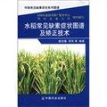 水稻常见缺素症状图谱及矫正技术