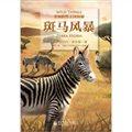 非洲野生动物王国探秘:斑马风暴